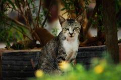 Motret załoga | kot Zdjęcie Stock