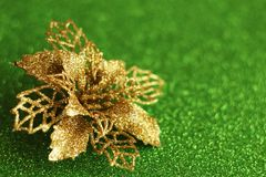 Motriz do Natal: poinsétia foto de stock