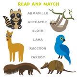 Mots d'enfants apprenant la fiche de travail de jeu lue et le match Paresse drôle Lama Raccoon Parrot Educational Game de fourmil Photos stock