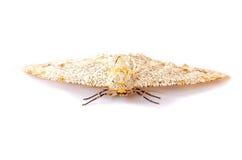 Motte stockfotografie