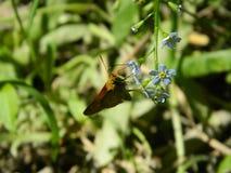 Motte auf der Blume Stockfotografie