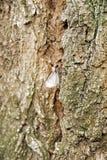 Motte auf einem Stamm Stockfoto