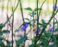 Motte auf einer Blume Stockfoto