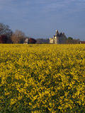 Motte castle  from a rapeseed field ,Usseau. In the XVth century this castle was owned by Geoffrey Boucicaut brother of the famous marshal of France Royalty Free Stock Photos