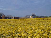 Motte castle  from a rapeseed field ,Usseau. In the XVth century this castle was owned by Geoffrey Boucicaut brother of the famous marshal of France Stock Photography