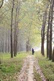 Motte d'automne Image stock