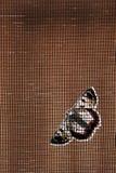 Motte flyscreen ein Stockfotos
