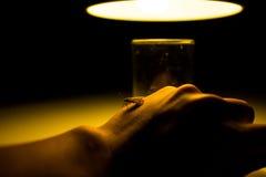Motte im Glas mit Strahl des Lichtkonzeptes Stockbilder