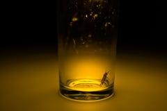 Motte im Glas mit Strahl des Lichtkonzeptes Lizenzfreies Stockbild
