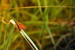 Motte im Gras Stockfoto