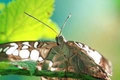 Motte und Blütenstaub Lizenzfreie Stockfotografie