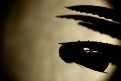 Motte und großer Mond Lizenzfreies Stockbild