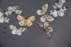 Motten in het water stock fotografie