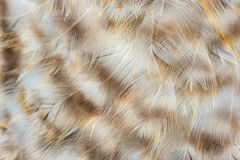 Mottled Chicken Feathers Macro Royalty Free Stock Photo