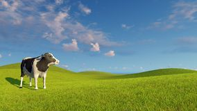 Mottled dairy cow on a green meadows Stock Photos