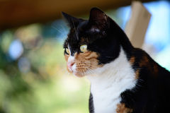 A mottled fur cat Royalty Free Stock Images