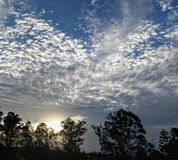 Mottled Magnificence in the Sky. This magical moment of dramatic mottled clouds encircling glorious gum trees was captured at sunset Royalty Free Stock Photography