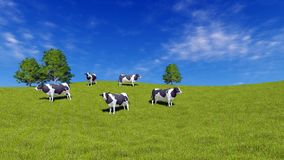 Mottled milk cows graze on green meadow. Mottled milk cows graze on the open meadow covered with fresh green grass under blue sky at sunny day. Rural landscape royalty free illustration