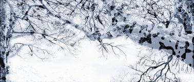 Mottled winter trees. Mottled and snowy winter trees. Landscape Royalty Free Stock Images