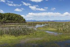 Motueka landskap nära Abel Tasman National Park, södra ö, Fotografering för Bildbyråer