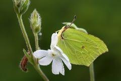 Motyl. Zdjęcia Stock