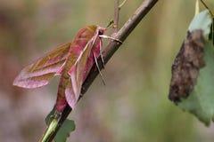 Motyl. Zdjęcia Royalty Free
