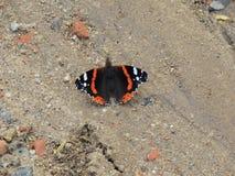 Motyl Стоковое Изображение