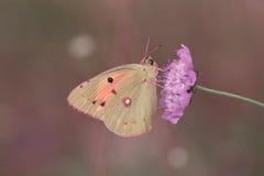 Motyl zdjęcia stock