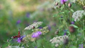 Motyl zbiory