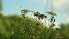 Motyl zdjęcie wideo