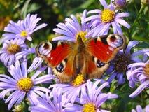 motyl colours bzu Zdjęcia Stock