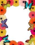 motyl daisy rama zdjęcie royalty free