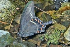Motyl 3 i żaba Zdjęcie Stock