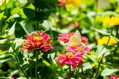 Motyl i kwiat Zdjęcie Stock
