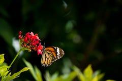 Motyl i kwiat Zdjęcia Stock