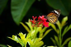Motyl i kwiat Fotografia Stock