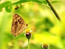 Motyl i kwiat Zdjęcia Royalty Free