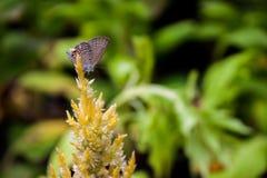 Motyl i kwiat Obrazy Royalty Free