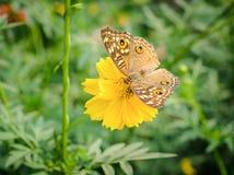 Motyl i kwiaty Obrazy Royalty Free