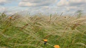 Motyl i lato wiatr zbiory