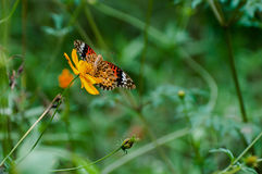 Motyl i słonecznik Obrazy Royalty Free