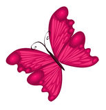motyl ilustracja szczegółowa ilustracja Fotografia Royalty Free