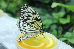 Motyl je pomarańcze Zdjęcia Royalty Free