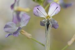 Motyl kocha kwiaty Obraz Stock
