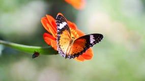 motyl kolorowe Zdjęcia Royalty Free