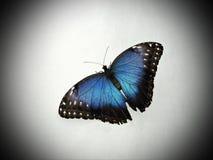 motyl kolorowe Obrazy Stock