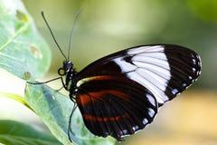 motyl kolorowy Fotografia Stock