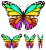 motyl kolorowy Zdjęcia Royalty Free