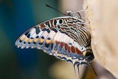 motyl kolorowy Zdjęcia Stock