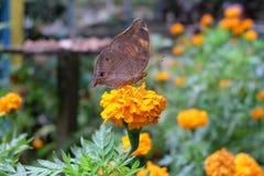 Motyl obraz royalty free